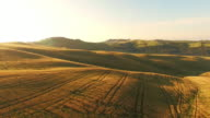 AERIAL Ruts in a field of wheat video