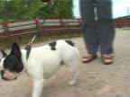 Sad little dog grunting video