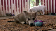 Sad little puppy dogs video