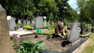 sad widow woman plant flowers on father brother tomb in cemetery video