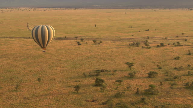 AERIAL: Safari hot air balloon full of happy tourists flying above the ground video