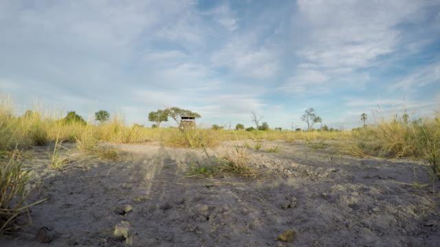 Safari vehicle driving over a Gopro camera in the Botswana bush video