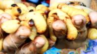 Sago Palm Weevil video