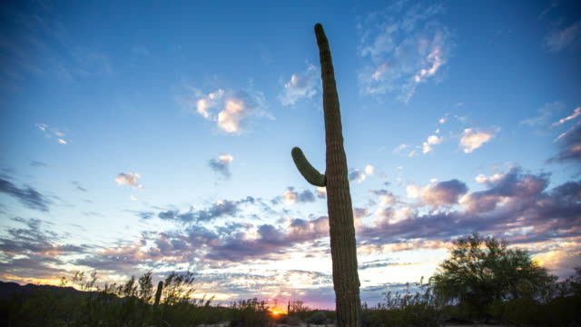 Saguaro Cactus at Sunset Time Lapse video