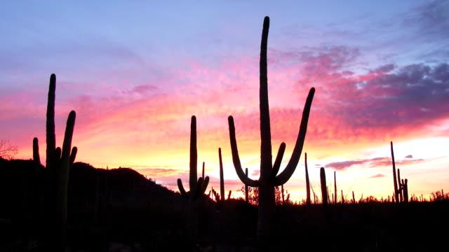 Saguaro Sunrise video