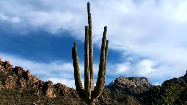 Saguaro Time-Lapse - HD video