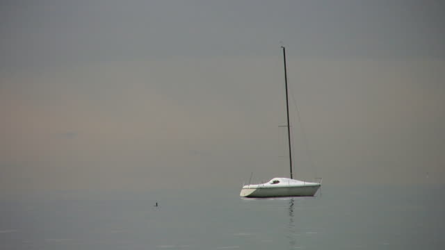 Sailboat. video