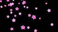Sakura  (Floating flower) black backgroung HD video