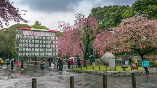 Sakura in front of Ueno park , Ueno Tokyo , Japan , Timelapse movement video