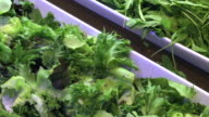 Salad bar in luxury restaurant , Bangkok , Thailand. video