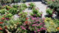Sale of flowers. video