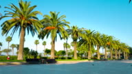 Salou palm trees promenade, Spain video