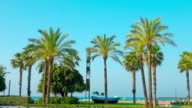 Salou summer beach with palm trees, Spain, Europe video
