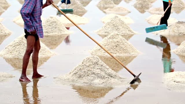 Salt harvesting, Thailand. video