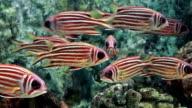 Saltwater fish video
