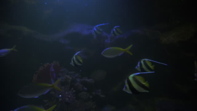Saltwater fishes video