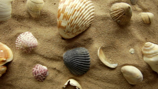 sand and shells         NA BA video