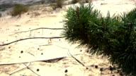 Sands growing trees video