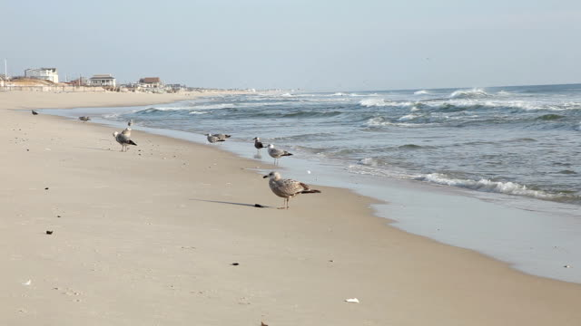 Sandy beach in morning, water gently lapping at the shore video