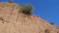Sandy rock with a lonely green tree. Crimea. Zelenogorie video