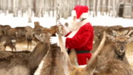 Santa has herd video