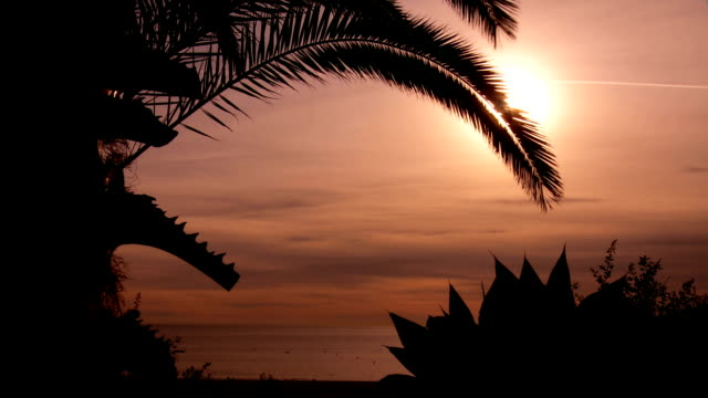Santa Monica relaxing video