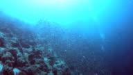 Sardines Run video