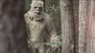 Sasquatch video