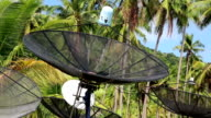 Satellite dishes amongst palm trees on the Koh-Chang island, Thailand video