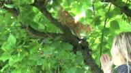 Saving my kitten on the tree video