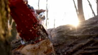 SLO MO Sawdust flying while cutting a tree video