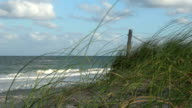 Sawgrass waving in the wind on a sandy beach video