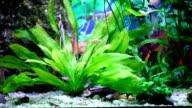 Scalar fish. video