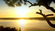 Scandinavian landscape. Lonely pine at sunset on a cliff. Dolly shot video