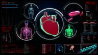Scanning blood vessel, lymphatic, heart, circulatory system in digital display video