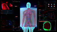 Scanning blood vessle in female body in digital display dashboard. video