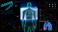 Scanning body. Rotating Female  lungs, Pulmonary Diagnostics in digital display. video