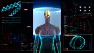 Scanning Brain female body in digital display dashboard. X-ray. video