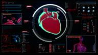 Scanning heart. Human cardiovascular system. medical technology. video