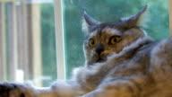 Scared cat 1 - HD 30F video