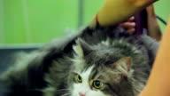 Scared cat video