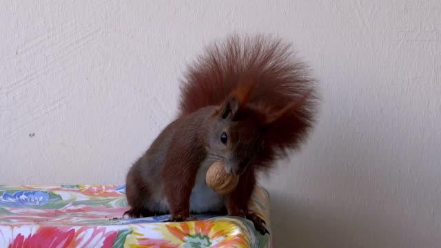 Scared squirrel video