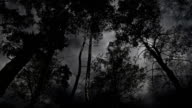 Scary black and white trees during the storm. video