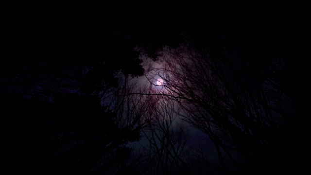 Scary bloody red moon in the forest video