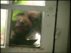 Scary burglar video