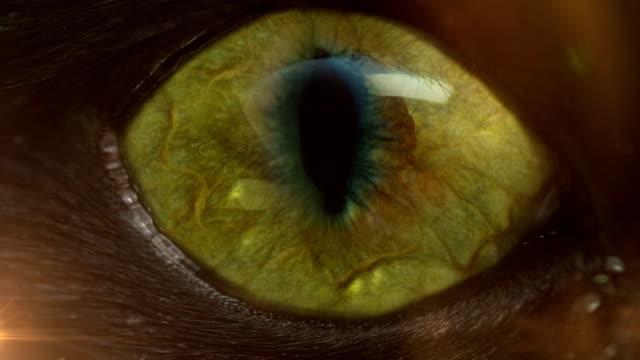 scary eye video