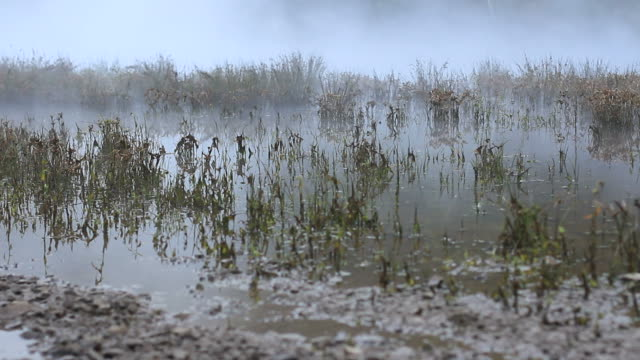 Scary River Marshes Scene video