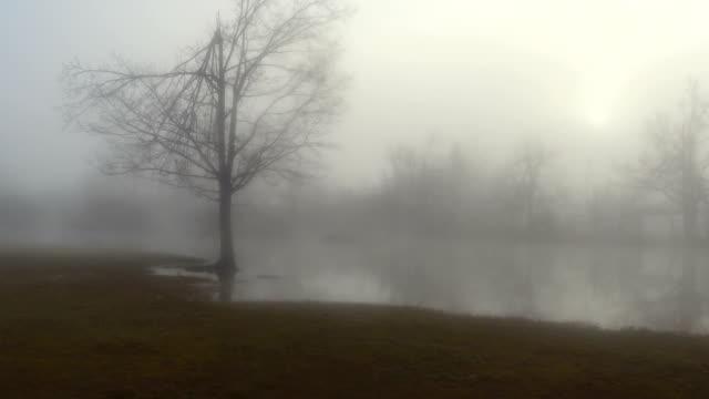 AERIAL: Scary scene of flooded meadow fields in foggy winter video