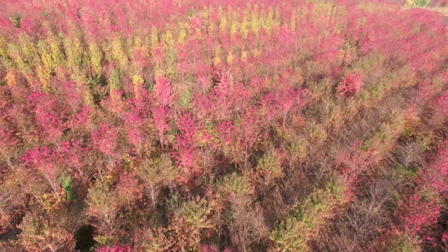 Scenic Aerial of Autumn Colors, Maple trees, Forests. video