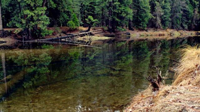 Scenic River In Yosemite National Park video